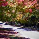 Yackandandah Autumn Series ~ Welsford St by Jane Keats