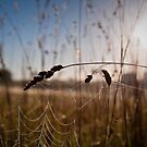 Grass and Web by Barb Leopold