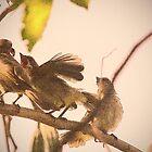 birds outside my window by stbiii0