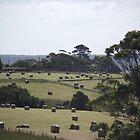 Hay Bales Galore by CallumPoke