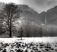 Foggy Yosemite Winter by Surentharan Murthi