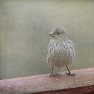 A Little Birdy Told Me by Renee Blake