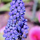 little blue bells by xxnatbxx