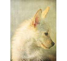 We Miss You Cooper Photographic Print