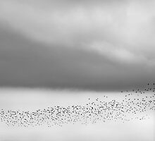 Flock in Flight by Dave  Miller