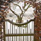 Garden gate in snow by StefanFierros