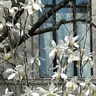 Metropolitian Blooms - New York City by Marijane  Moyer