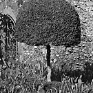 Box Tree by DExPIX