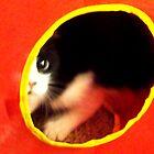 oreo cat by bechitoztm