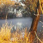 Billabong sunrise by Carly Haddad