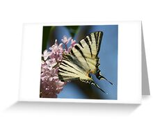 Sail Swallowtail Greeting Card