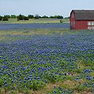 Red Barn Amongst The Blue Bonnets by ☼Laughing Bones☾