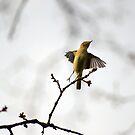 Birdie by BrightBrownEyes
