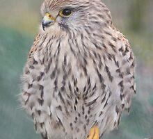 British Wildlife Centre by lutontown