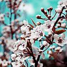 Spring 1 by Chloe Garfield