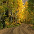 Kebler Pass Aspens by Wojciech Dabrowski