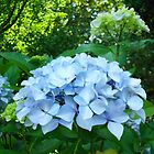 Floral art Blue Hydrangea Flowers Garden Baslee Troutman by BasleeArtPrints