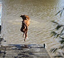 Whaooooo! Toller dives by littlewings