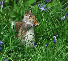 Springtime squirrel by Adri  Padmos