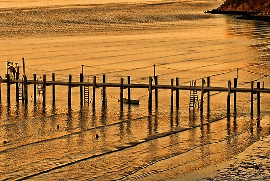 Golden Waters at China Camp, CA by vincefoto
