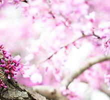 Cherry Blossom 2 by jkeys