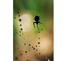 Spider Sillouette Photographic Print