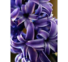 Purple Hyacinth Macro Photographic Print