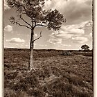 Morden Bog, Wareham, Dorset ~ Lone Tree by Pete Vincent