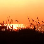 Sunset Through Sea Oats by DaveMoffatt