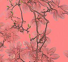 Magnolia Blossom in Colored Pencil by Rebecca  Haegele