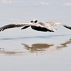 Pelican Shadow by MaryLynn