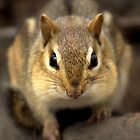 Are You Nuts? by Jeff Weymier