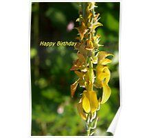 Snapdragon birthday greeting Poster