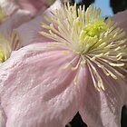 Pastel Petals  by Pamela Jayne Smith