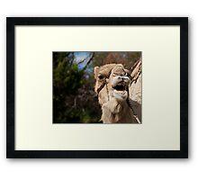 Camel Calling, Camel Farm, Outback NSW Framed Print