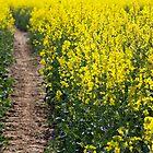 Path in a Rapeseed Field by Nicholas Jermy