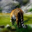 The Amur Tiger.. Taken at Dublin Zoo, Ireland.. by eithnemythen