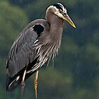 Great Blue Heron In the Rain by Daphne Eze