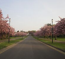 Blossom Street. by Conor Gilmour