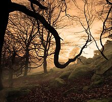 Spooky Woods by johnfinney