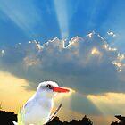 White Kingfisher by CrismanArt