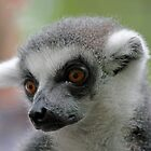 Ring-Tailed Lemur 2 by Leanne Allen