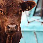 Bull Showdown by KansasA