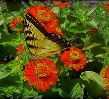 Photo Art Butterfly by sillyfrog