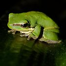 Little Green Frog! by Gabrielle  Lees
