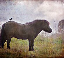 Little Rider by Barb Leopold