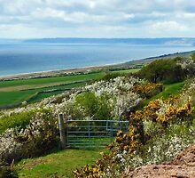 Chesil Beach Overlook ~ Dorset by Susie Peek