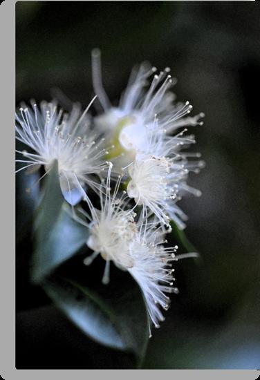White Blossom by Karen E Camilleri