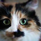 Eye see you baby! by WilliamJPhoto