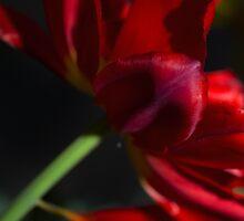 Petals by Dania Reichmuth